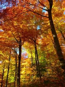 Autumn climate of Jodhpur